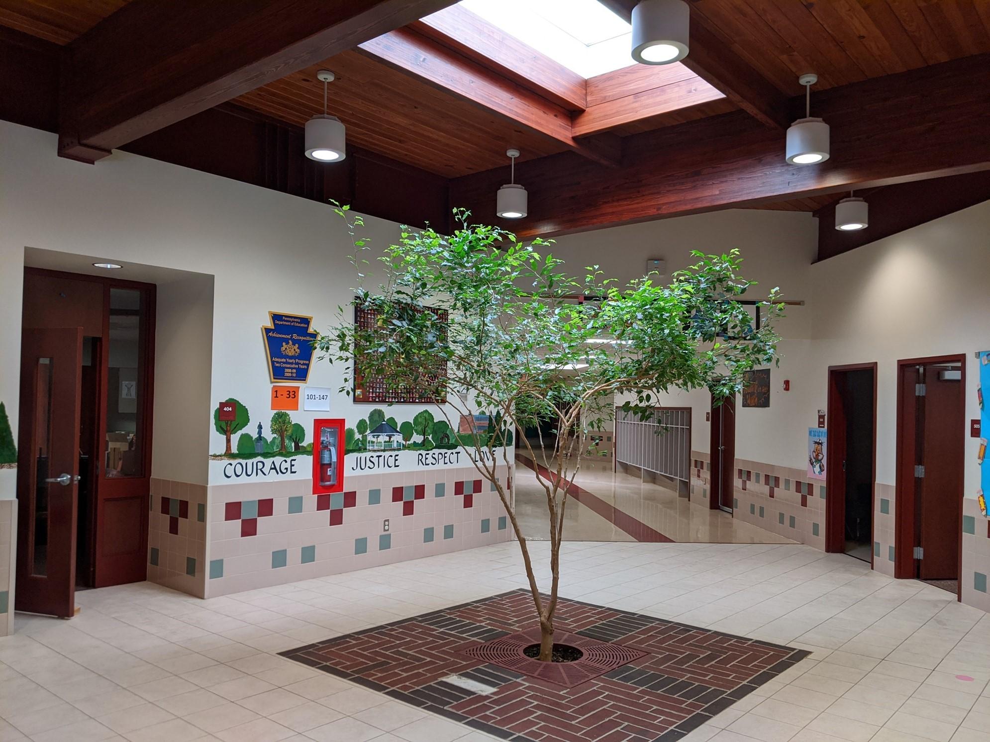 Corry Area Primary School Tree
